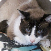 Adopt A Pet :: Wallace - Port Jervis, NY