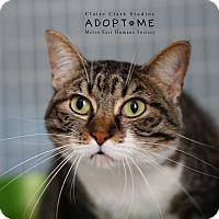 Adopt A Pet :: Gramsey - Edwardsville, IL
