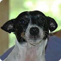 Adopt A Pet :: Prissy - Crump, TN