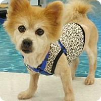 Adopt A Pet :: Andy - Mooy, AL