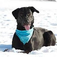 Adopt A Pet :: Carlos - Rigaud, QC