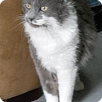 Adopt A Pet :: Adam - Colorado Springs, CO