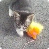 Adopt A Pet :: Mia - Santa Rosa, CA