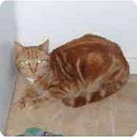 Adopt A Pet :: Sunny Boy - Hamburg, NY