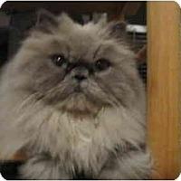 Adopt A Pet :: Fifi DuBois - Los Angeles, CA