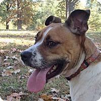 Adopt A Pet :: Dreamer - Pocahontas, AR