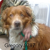 Adopt A Pet :: Gregory - baltimore, MD
