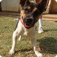 Adopt A Pet :: K - Bedford, TX