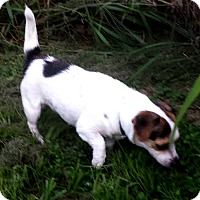 Adopt A Pet :: CASEY - Terra Ceia, FL