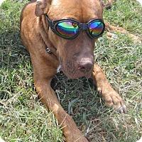 Adopt A Pet :: Toby - Copperas Cove, TX