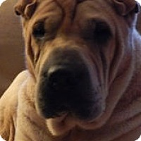Adopt A Pet :: Emma - Barnegat Light, NJ