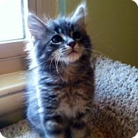 Adopt A Pet :: Zinger - Chattanooga, TN