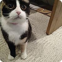 Adopt A Pet :: Helen - St. Louis, MO