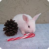 Adopt A Pet :: Flour - Bonita, CA