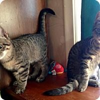 Adopt A Pet :: Johnny and Cash - Sterling Heights, MI