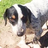 Adopt A Pet :: Chapelle Sacorria - Houston, TX