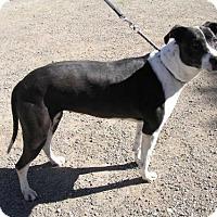 Adopt A Pet :: STELLA` - Yucaipa, CA