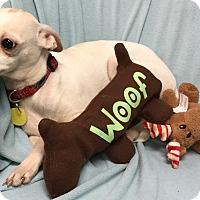 Adopt A Pet :: Louise - Phoenix, AZ