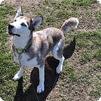 Adopt A Pet :: Winter - Crystal Lake, IL