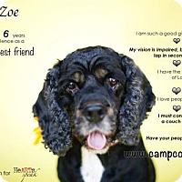 Adopt A Pet :: Zoe - Sherman Oaks, CA
