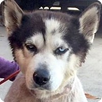 Adopt A Pet :: DARCY (video) - Los Angeles, CA