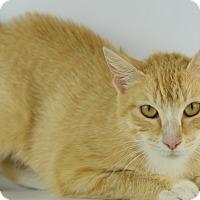 Adopt A Pet :: CHEERIO - LAFAYETTE, LA