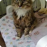 Adopt A Pet :: NJ - Dixie - Blairstown, NJ