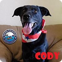Adopt A Pet :: Cody - Arcadia, FL