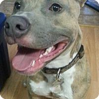 Adopt A Pet :: Banksy - Richmond, VA