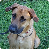Adopt A Pet :: Maximus - Delaware, OH