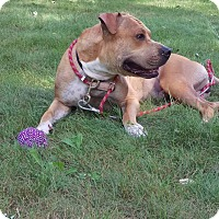 Adopt A Pet :: Korie - Groton, CT