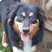 Adopt A Pet :: Griffin - Minneapolis, MN