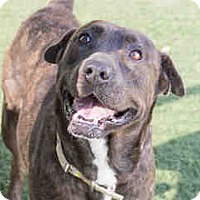Adopt A Pet :: Salma - Agoura, CA