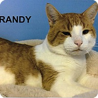 Adopt A Pet :: Randy - Medway, MA