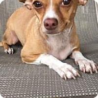 Adopt A Pet :: Wren - Weston, FL