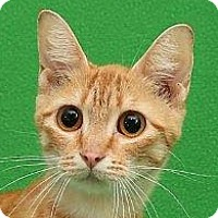 Adopt A Pet :: Daisy   URGENT - St. Charles, MO