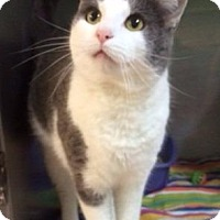 Adopt A Pet :: Romeo - Port Clinton, OH