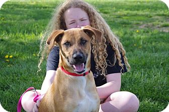 Shepherd (Unknown Type) Mix Dog for adoption in Elyria, Ohio - REX-Prison Grad