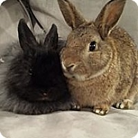 Adopt A Pet :: MIssy and Millie - Conshohocken, PA