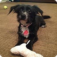 Adopt A Pet :: Stella (ADOPTION PENDING) - Whittier, CA