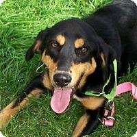 Adopt A Pet :: Zoe - East Sparta, OH