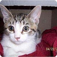 Adopt A Pet :: Kimmy - Island Park, NY