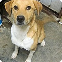 Adopt A Pet :: *Lady IN CT - PENDING - Westport, CT