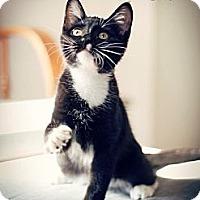Adopt A Pet :: Darla Adopted - Nine Mile Falls, WA