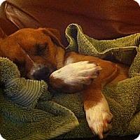 Adopt A Pet :: Georgie - Lake Forest, CA