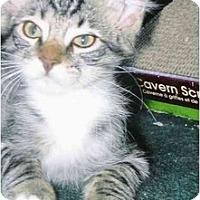 Adopt A Pet :: Kendall - Brea, CA