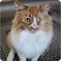 Adopt A Pet :: Seneca - Davis, CA