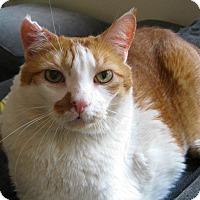 Adopt A Pet :: Axl - Brooklyn, NY
