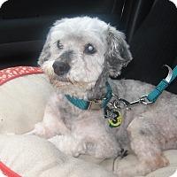 Adopt A Pet :: Aiden - Wilmington, DE