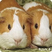 Adopt A Pet :: Butch and Cassidy - Santa Barbara, CA
